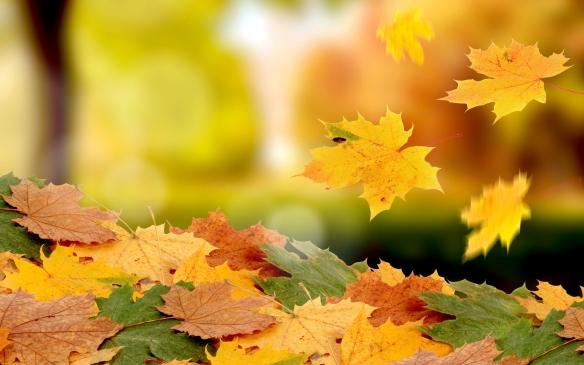 falling-leaves-autumn